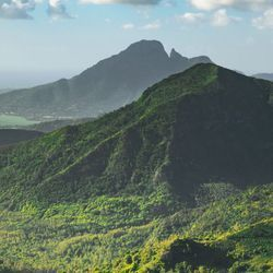 Tropical Forests in Africa's Mountains Store More Carbon than Previously Thought