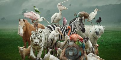 A bunch of vertbrate animals in a group