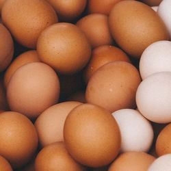 Research Finally Reveals Ancient Universal Equation for the Shape of an Egg