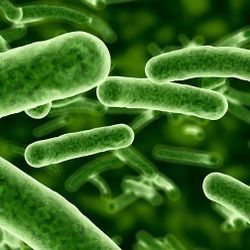 Bacteria May Hold Key for Energy Storage, Biofuels