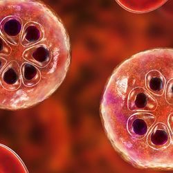 Drug Researchers Tackle the Malaria Parasite at Multiple Life Stages