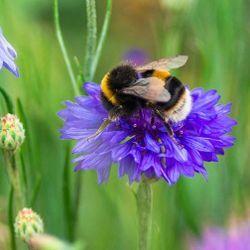 Pollinators Contribute to Flowering Plant Diversity