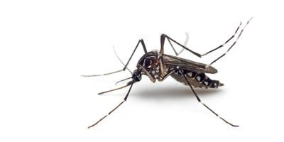 New Technology Designed to Genetically Control Disease-Spreading Mosquitoes