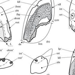 New Genus of Extinct Elephant Fish Discovered in Moscow