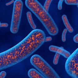 Bacteria Could Help Build Eco-Friendly Construction Materials