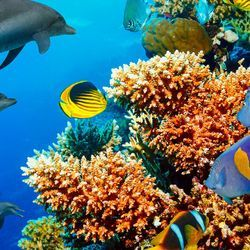 Reforestation Could Help Save Coral Reefs from Catastrophe