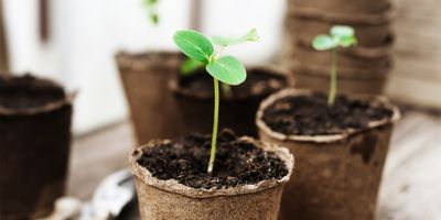 Chemical Discovery Gets Reluctant Seeds to Sprout