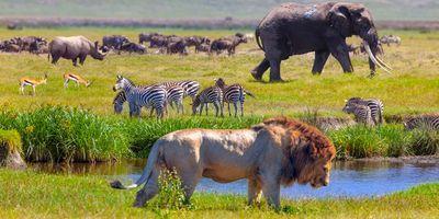 Biodiversity Matters