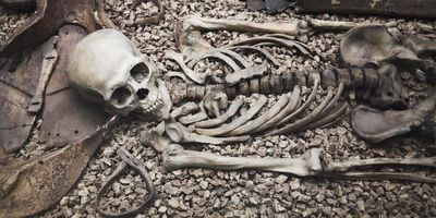 Ancient DNA Analysis Sheds Light on Dark Event in Medieval Spain