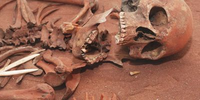 New Approach to Skeletal Age-Estimation Can Help Identify Juvenile Remains