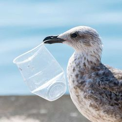 The Unknown Consequences of Plastic's Legacy, Found in Seabirds around the World