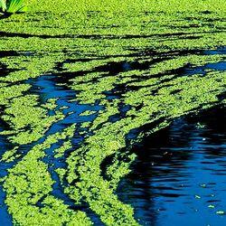 New Tool Can Identify Harmful Blue-Green Algae