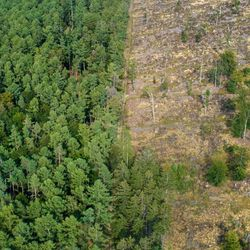 The Right Sequence of Policies Is Essential to Slow Deforestation