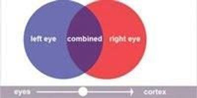 Findings on Eye-Signal Blending Re-Examines Nobel-Winning Research