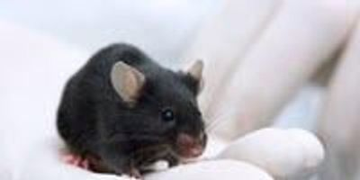 300 Blind Mice Uncover Genetic Causes of Eye Disease