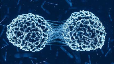 p53 Mutations in 10,000 Cancer Patients Shed New Light on Gene's Function