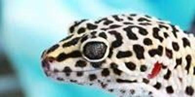 Tiny Light Detectors Work like Gecko Ears