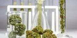 Tools for Cannabis Testing