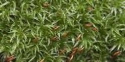 Moss Rapidly Detects, Tracks Air Pollutants in Real Time