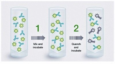How Column-Free Fluorescent Antibody Labeling Kits Work