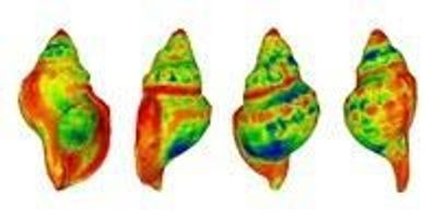 Sea Snail Shells Dissolve in Increasingly Acidified Oceans