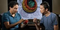 New Details of HIV Life Cycle
