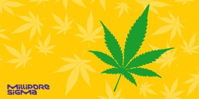 How Potent is Your Cannabis?