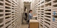 Scientists Quantify the Vast and Valuable Finds Stored on Museum Shelves