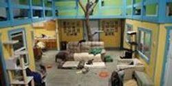 Illinois Study Pioneers Humane Feline Research Facility