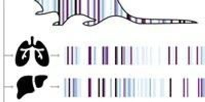 Recording Every Cell's History in Real-Time with Evolving Genetic Barcodes