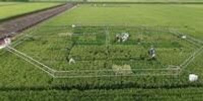 Rice Becomes Less Nutritious as CO2 Levels Rise