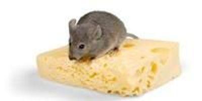 Researchers Defy Biology: Mice Remain Slim on Burger Diet