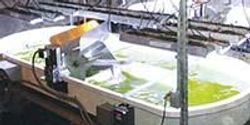 New Sandia Facility Tests Algae's Potential as Biofuel