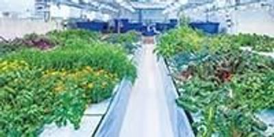 Using Aquaponics to Grow Medical Cannabis—Green Relief Inc.
