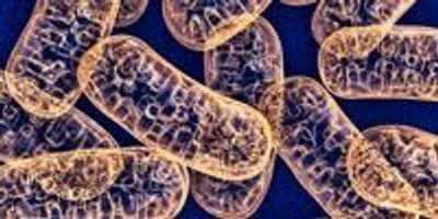 Cells Stressed Out? Make Mitochondria Longer