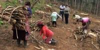 Wood Fuels Key to Easing Food Insecurity Situation in Sub-Saharan Africa