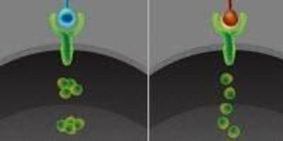Cells Communicate in a Dynamic Code