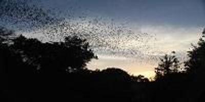 Bats as Barometer of Change