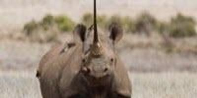 Team Uses DNA to Protect the Rhinoceros From Extinction