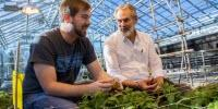 Researchers Trace the Potato's Origins, Learn about Its Untapped Potential