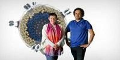Discovery Puts the Brakes on HIV's Ability to Infect