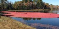 Solving Phosphorus Issues in Cranberry Growing