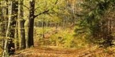 The Importance of Biodiversity in Forests Could Increase Due to Climate Change