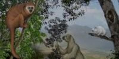 """Caribbean Islands Reveal a """"Lost World"""" of Ancient Mammals"""