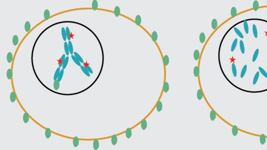 INSIGHTS on Developing Antibody-Drug Conjugates