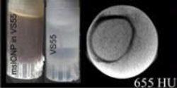 Nanotechnology Helps Rewarm Fast-Frozen Donor Tissue, Enabling Long-Term Viability