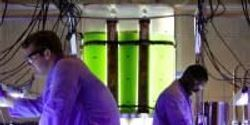 Biofuels from Bacteria
