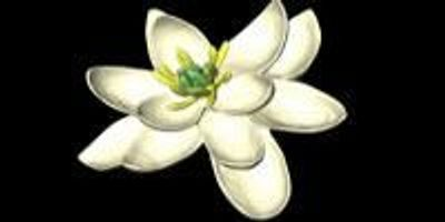 What Flowers Looked Like 100 Million Years Ago