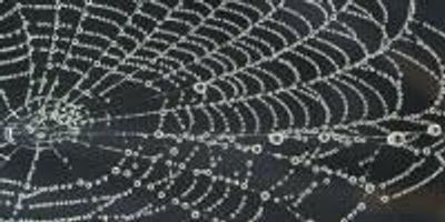 Green Method Developed for Making Artificial Spider Silk