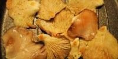Study: Nutritional Properties of Mushrooms Are Better When Grilled or Microwaved